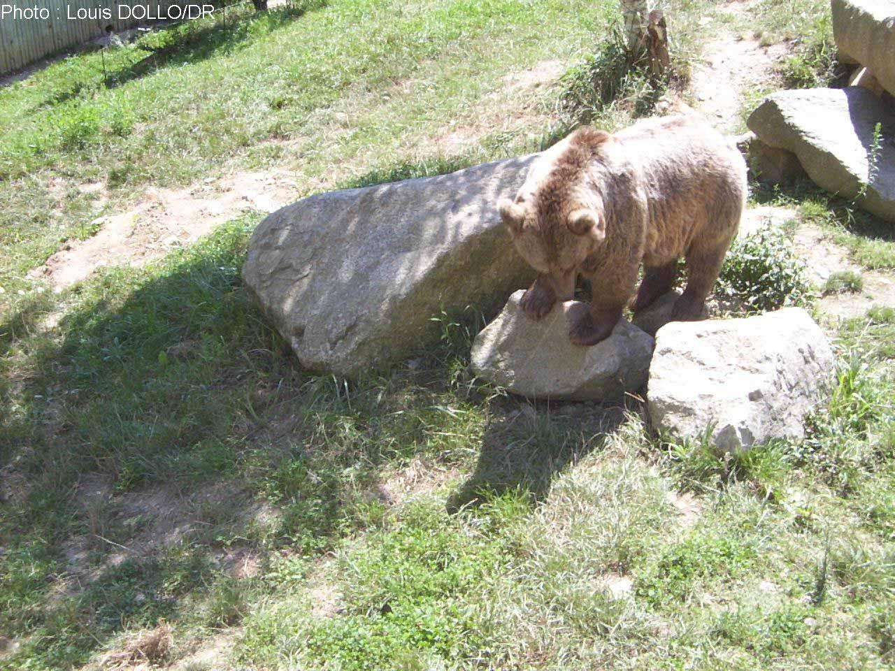 Un appel des associations pour relâcher des ourses en Béarn — Pyrénées
