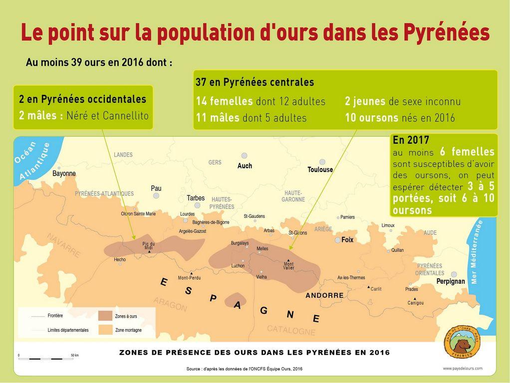Les lâchers d'ours sont plébiscités par les Français — Pyrénées