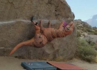 Un Dinosaure fait du Bloc !